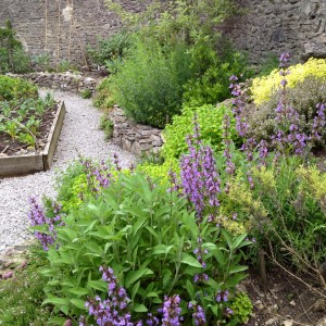 Tideswell Kitchen Garden #3