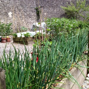 Tideswell Kitchen Garden #5